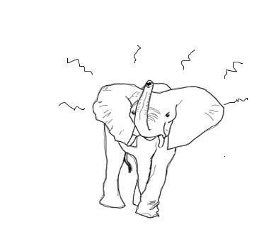 angryelefant.jpg